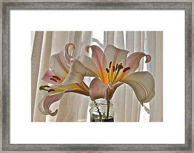 Country Lilies Framed Print