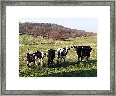 Country Living  Framed Print by Kiara Reynolds