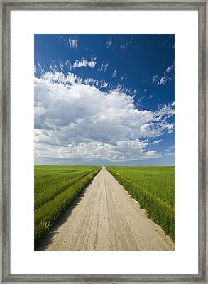 Country Road Through Grain Fields Framed Print by Dave Reede