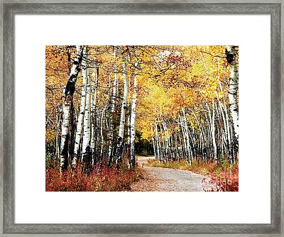 Country Roads Framed Print by Steven Reed