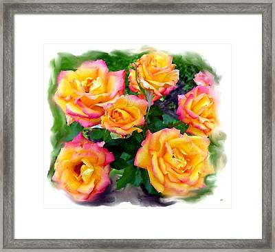 Country Roses Watercolor Framed Print by Will Borden