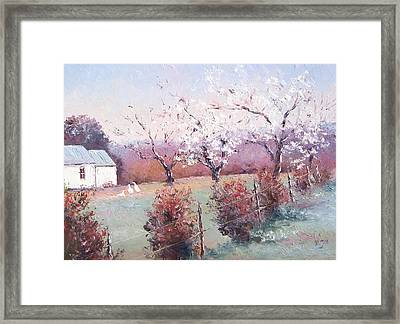 Country Scene With White Blossom Framed Print