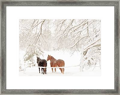Country Snow Framed Print by Cheryl Baxter