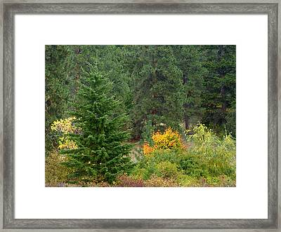 Country Solitude Framed Print by Will Borden