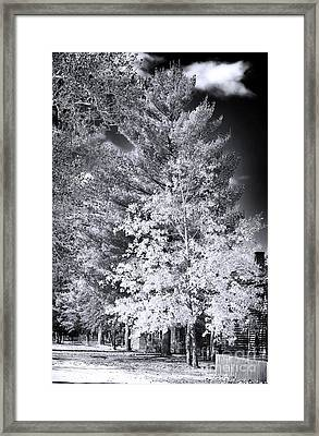 Country Trees Framed Print by John Rizzuto