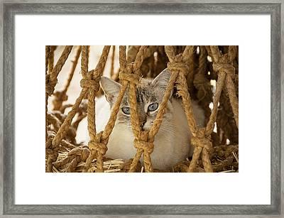 Countryside Kitty  Framed Print
