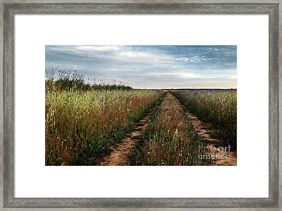 Countryside Tracks Framed Print
