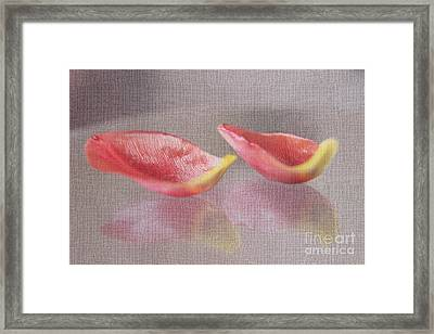 Couple Of Red Tulip Petals Framed Print by Eden Baed