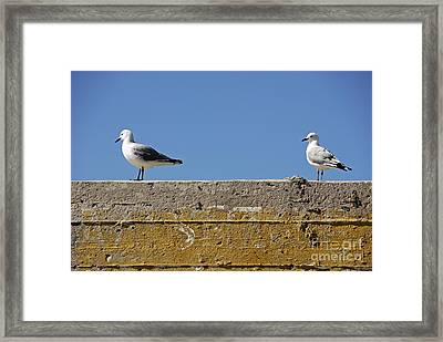 Couple Of Seagulls On A Wall Framed Print by Sami Sarkis