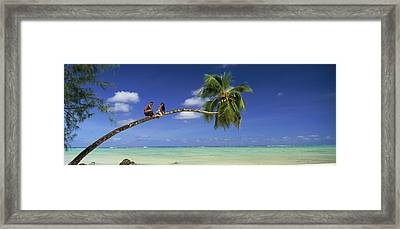 Couple On Trunk Of A Palm Tree Framed Print