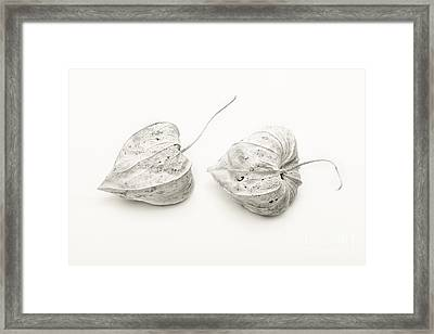 Couple Physalis Framed Print by Sviatlana Kandybovich