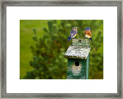 Couples Framed Print by David Simons