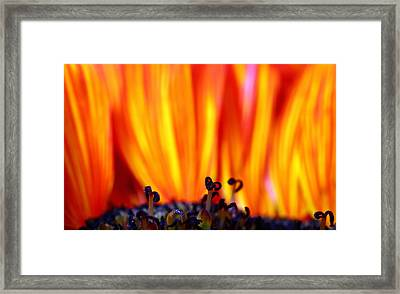 Courage Under Fire Framed Print
