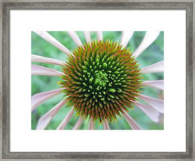 Courageous Framed Print by Mike Podhorzer
