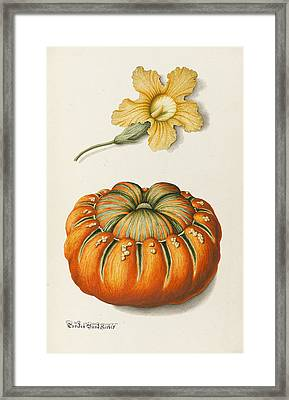 Courgette And A Pumpkin Framed Print