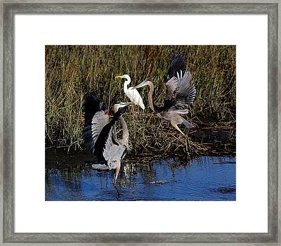 Courting Framed Print by Paulette Thomas