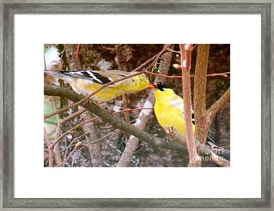 Courting Time Framed Print by Brenda Ketch