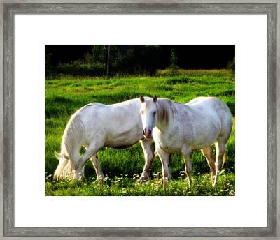 Courtship Framed Print