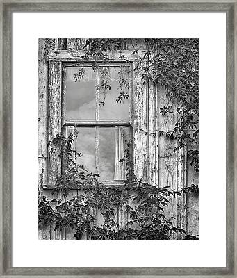 Covered In Vines - Window In Old House - Black And White Framed Print by Nikolyn McDonald