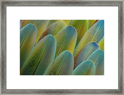 Covert Wing Feathers Of The Camelot Framed Print by Darrell Gulin