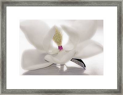 Framed Print featuring the photograph Coveted Fantasy by Janie Johnson