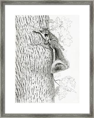 Coveting Nuts Framed Print