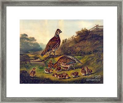 Covey 1856 Framed Print