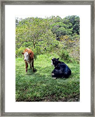 Framed Print featuring the photograph Cow 4 by Dawn Eshelman