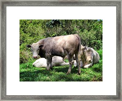 Framed Print featuring the photograph Cow 5 by Dawn Eshelman