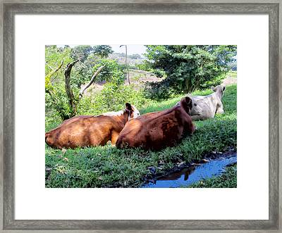 Framed Print featuring the photograph Cow 6 by Dawn Eshelman