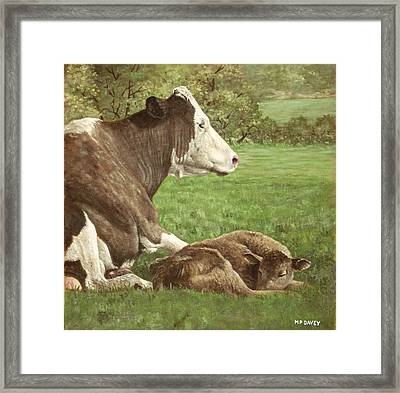 Cow And Calf In Field Framed Print by Martin Davey