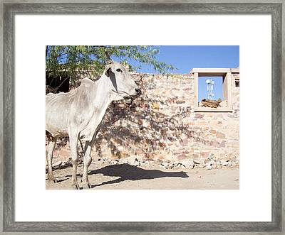 Cow And Stonewall With Communications Framed Print by David H. Wells
