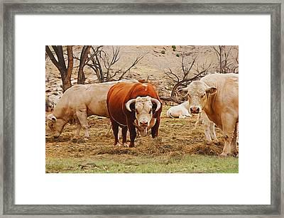 Cow Art 2 Digital Art Framed Print