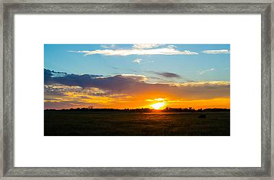 Cow At Sunset Framed Print