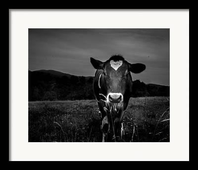 Dairy Farm Framed Prints