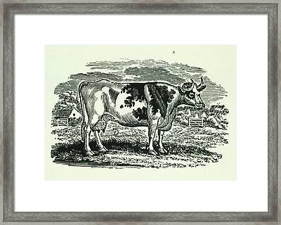 Cow Framed Print by British Library