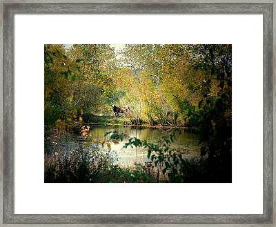 Cow By The Pond Framed Print