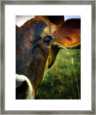 Cow Eating Grass Framed Print by Bob Orsillo