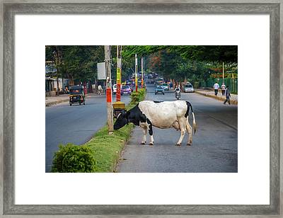 Cow Grazing On The Street, Bangalore Framed Print by Ali Kabas