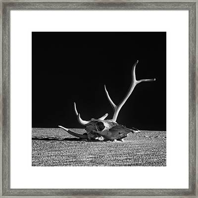 Cow Skull And Antlers Framed Print