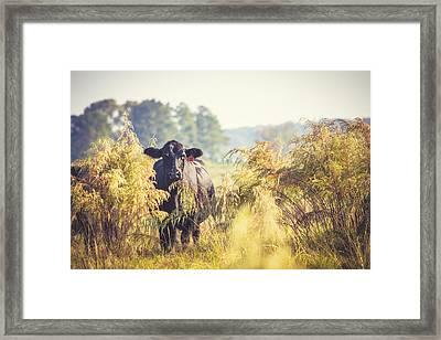 Cow Hiding In The Weeds Framed Print by Karen Broemmelsick