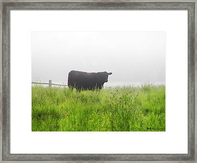 Cow In Fog Framed Print by Bill Cannon