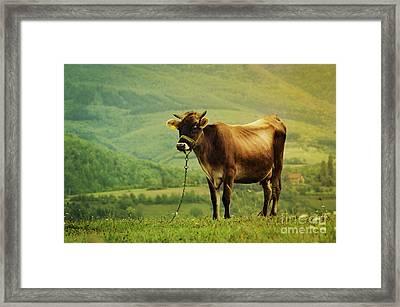 Cow In The Field Framed Print by Jelena Jovanovic