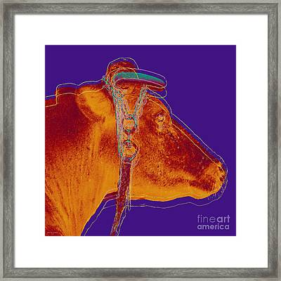 Cow Pop Art Framed Print by Jean luc Comperat