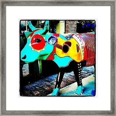 Cow Moo Cow Parade In Austin Framed Print