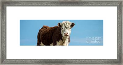 Cow Panoramic Portrait Framed Print by Edward Fielding