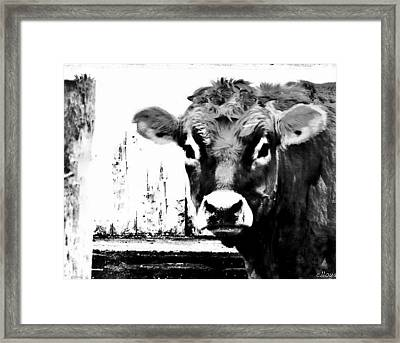 Cow  Pen And Ink Framed Print