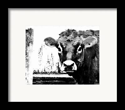 Pen And Ink Of Barn Photographs Framed Prints