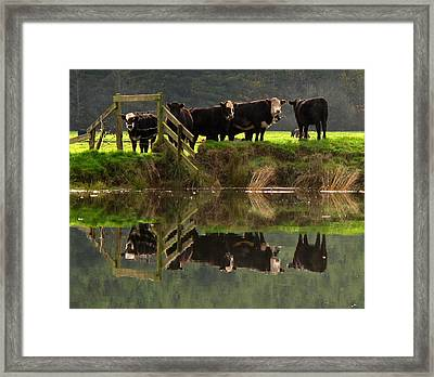 Framed Print featuring the photograph Cow Reflections by Suzy Piatt