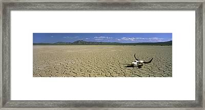 Cow Skull At Mojave Desert, California Framed Print by Panoramic Images